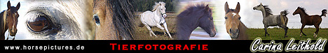 Carina´s Horsepictures